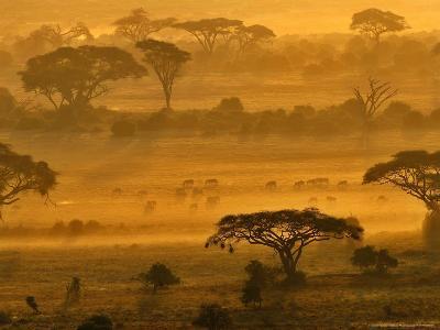 Herbivores at Sunrise, Amboseli Wildlife Reserve, Kenya