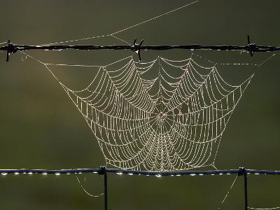The Work of a Spider is Highlighted by the Morning Sun