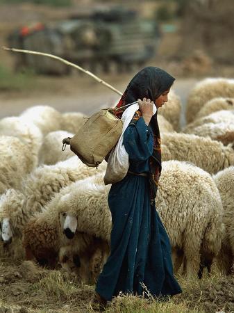 An Iraqi Shepherd, a Young Girl, Herds Her Sheep