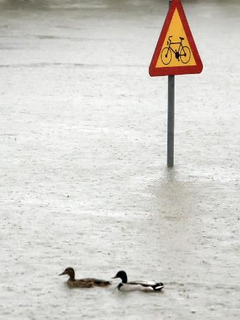 Two Ducks Swim Past a Traffic Sign in a Flooded Street Near the Sava River, in Belgrade