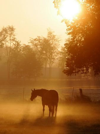 Horse Stands in a Meadow in Early Morning Fog in Langenhagen, Northern Germany