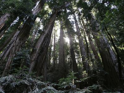 Travel Trip Muir Woods 100th
