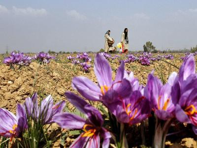 India Kashmir Daily Life