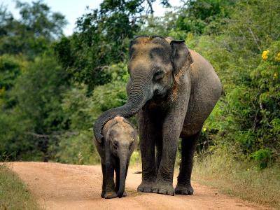 APTOPIX Sri Lanka Elephants