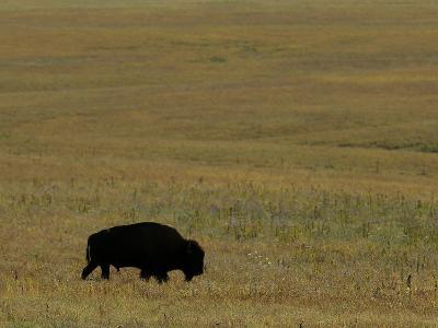 Travel Trip Tallgrass Prairie