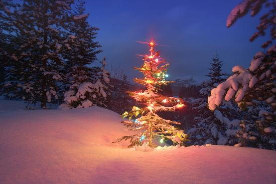 Christmas Tree In Snow With Lights Photographic Print At Allposters Com