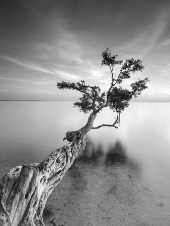 Water Tree V