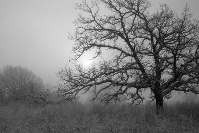 Winter Frost 6