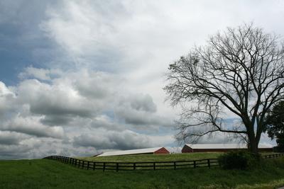 Paddock Tree