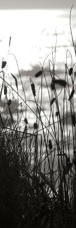 Coastal Grass Panel II