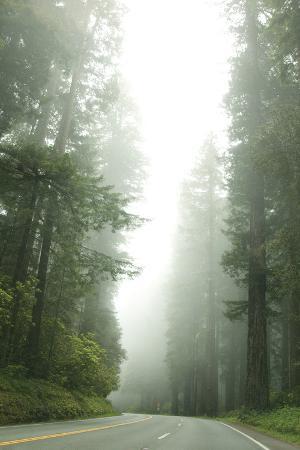 Redwood Highway 1