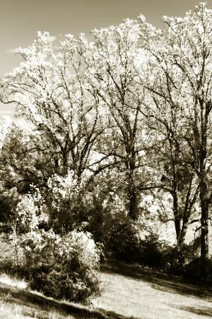 Autumn Meadow 2