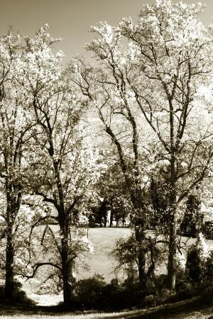 Autumn Meadow 1