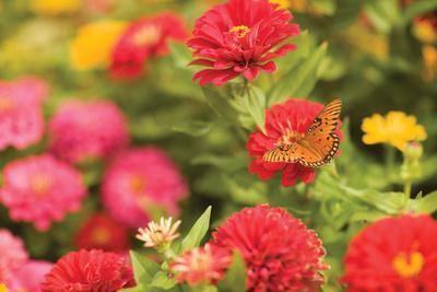 Butterfly Field I