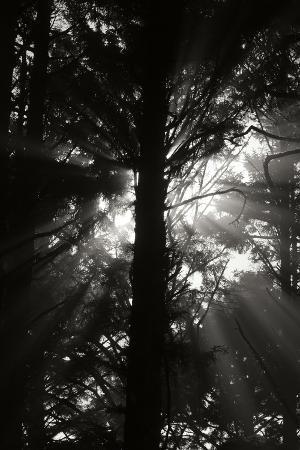 Light and Shadows I