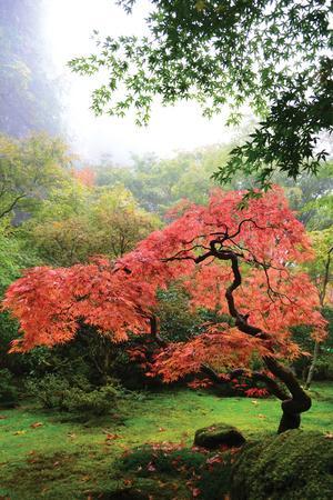 Japanese Gardens IV