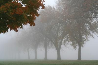 Foggy Trees I