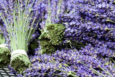 Lavender Bunches I
