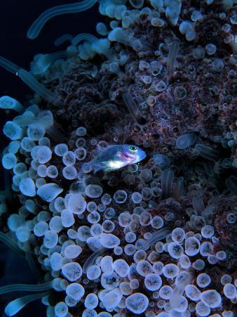 Jack Crevalle Fish (Caranx)