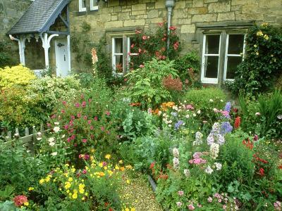 Cottage Garden With, Colourful Flower Beds Direlton, Scotland, UK