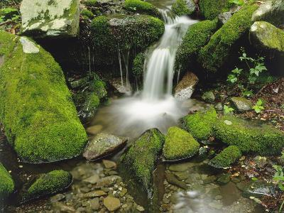 Moss-Covered Rocks Along a Stream at the Chimneys in Late Spring, Tennessee, USA