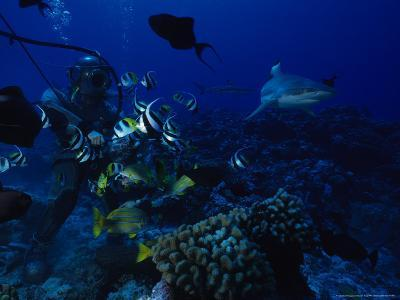 Blacktip Reef Shark, with Diver, Polynesia