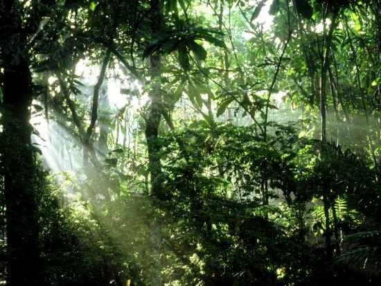 Tropical Rainforest Panama Photographic Print By John