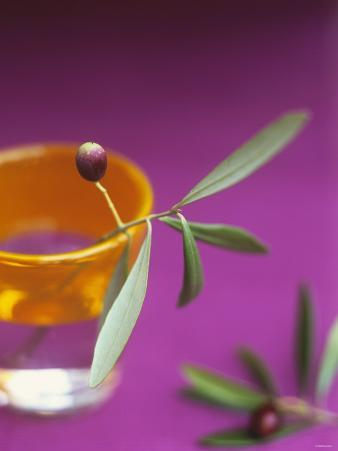 Olive Sprig with Olive in a Glass
