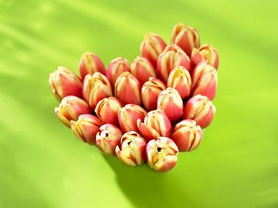Heart of Tulips
