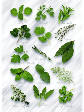 Various Herbs on Marble