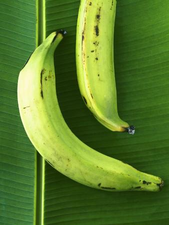 Two Plantains on a Banana Leaf