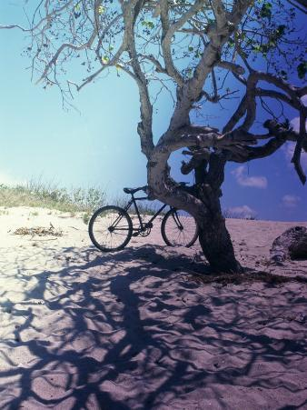 Bicycle Parked Against a Tree