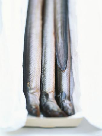 Four Smoked Eels in a Box