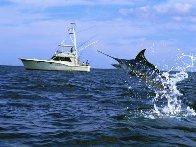 Marlin with Fishing Boat in Background
