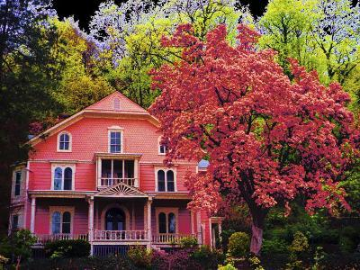 A Pink House in the Wilderness