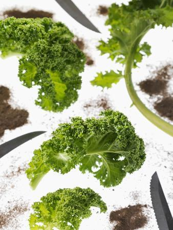 Kale Leaves with Knife and Soil