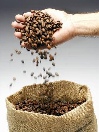 Coffee Beans Falling from Someone's Hand into a Sack