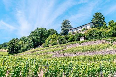 The UNESCO World Heritage Site of the Lavaux Vineyards near Lausanne in Switzerland.