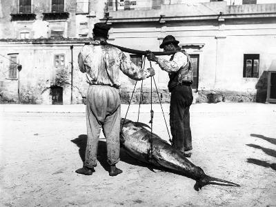 Two Men Carrying a Freshly-Caught Tuna. Palermo