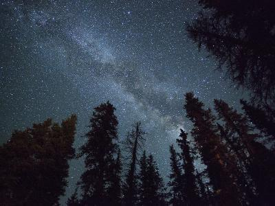 The Milky Way Shines Above the Forest in the San Juan Mountains of Southern Colorado.