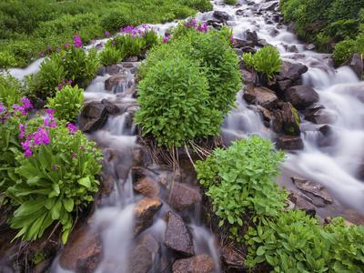 A Mountain Stream Within the Indian Peaks Wilderness Area Near Rocky Mountain National Park, Co