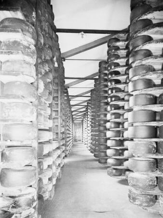 Cheese Warehouses of Monte Di Bologna