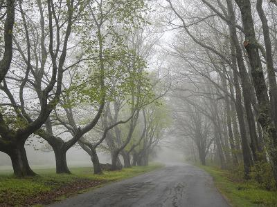 Misty Road in Early Springtime, Cape Elizabeth, Maine