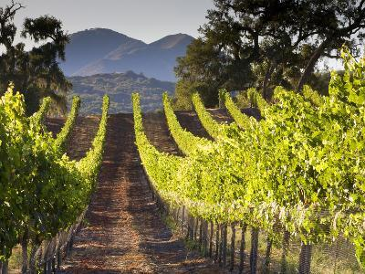Arroye Grande, California: a Central Coast Winery