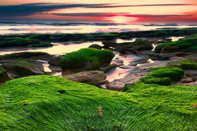 Marineland, Florida: Sunrise at the Beach with Algae Covered Rocks