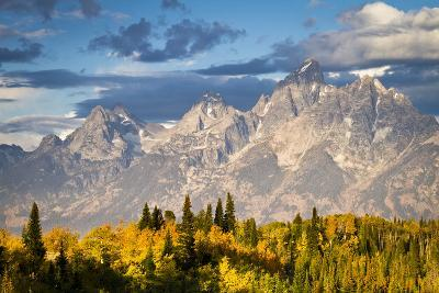 Fall Aspen Leaves Stand Beneath the Teton Mountains in Grand Teton National Park, Wyoming