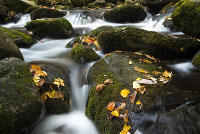 Smoky Mountain National Park, Tennessee: a Small Stream Flowing in Roaring Forks