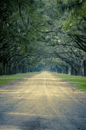 Savannah, Georgia: a Dirt Road Lined with a Canopy of Oak Trees at the Wormsloe Estate