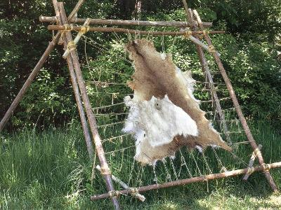 Deer Hide Stretched on Sapling Frame to Be Scraped and Tanned, Heritage Hill, Green Bay, Wisconsin