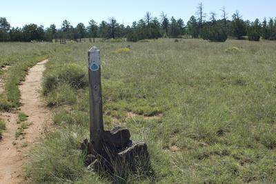 Continental Divide Trail in Cibola County, New Mexico